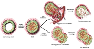 Cancercellflow