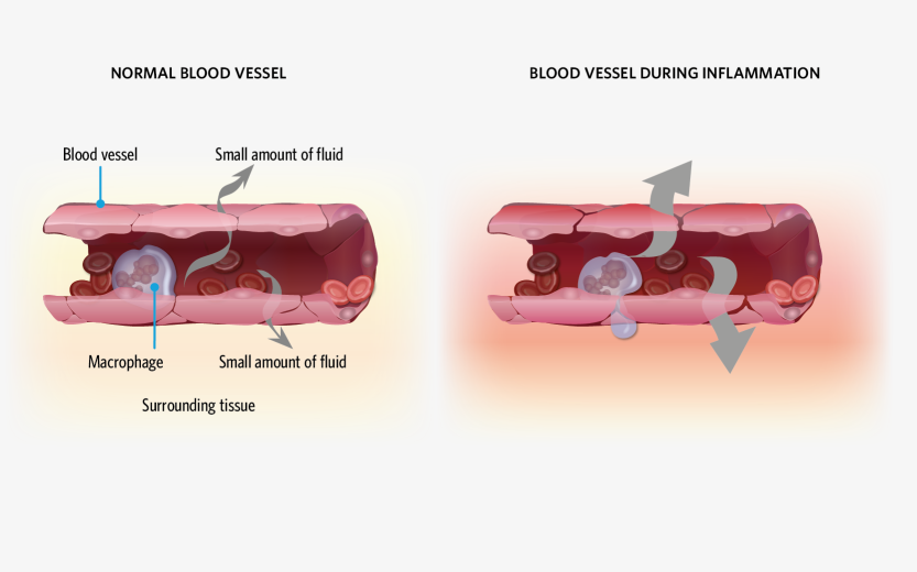 blood vessels-01